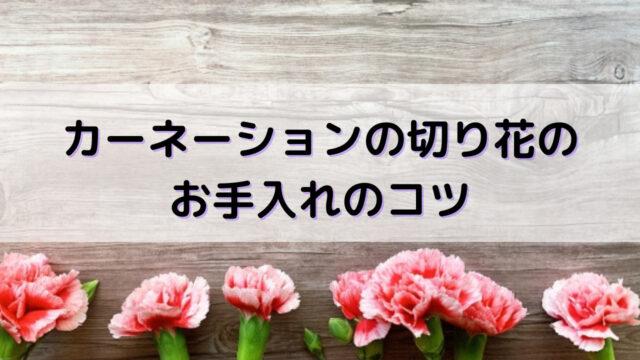 カーネーション 切り花 コツ