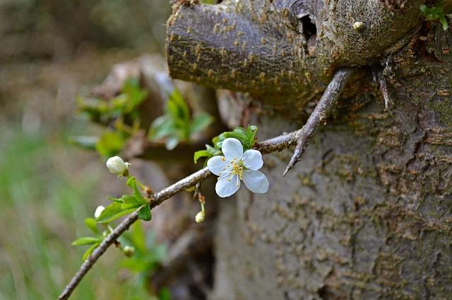 梅の木の幹