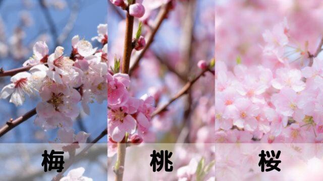 梅と桃と桜